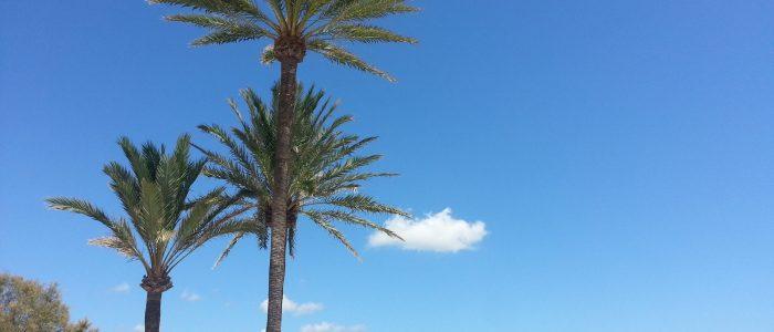 Palm trees Majorca yoga-fpr-blokesandblokettes.com
